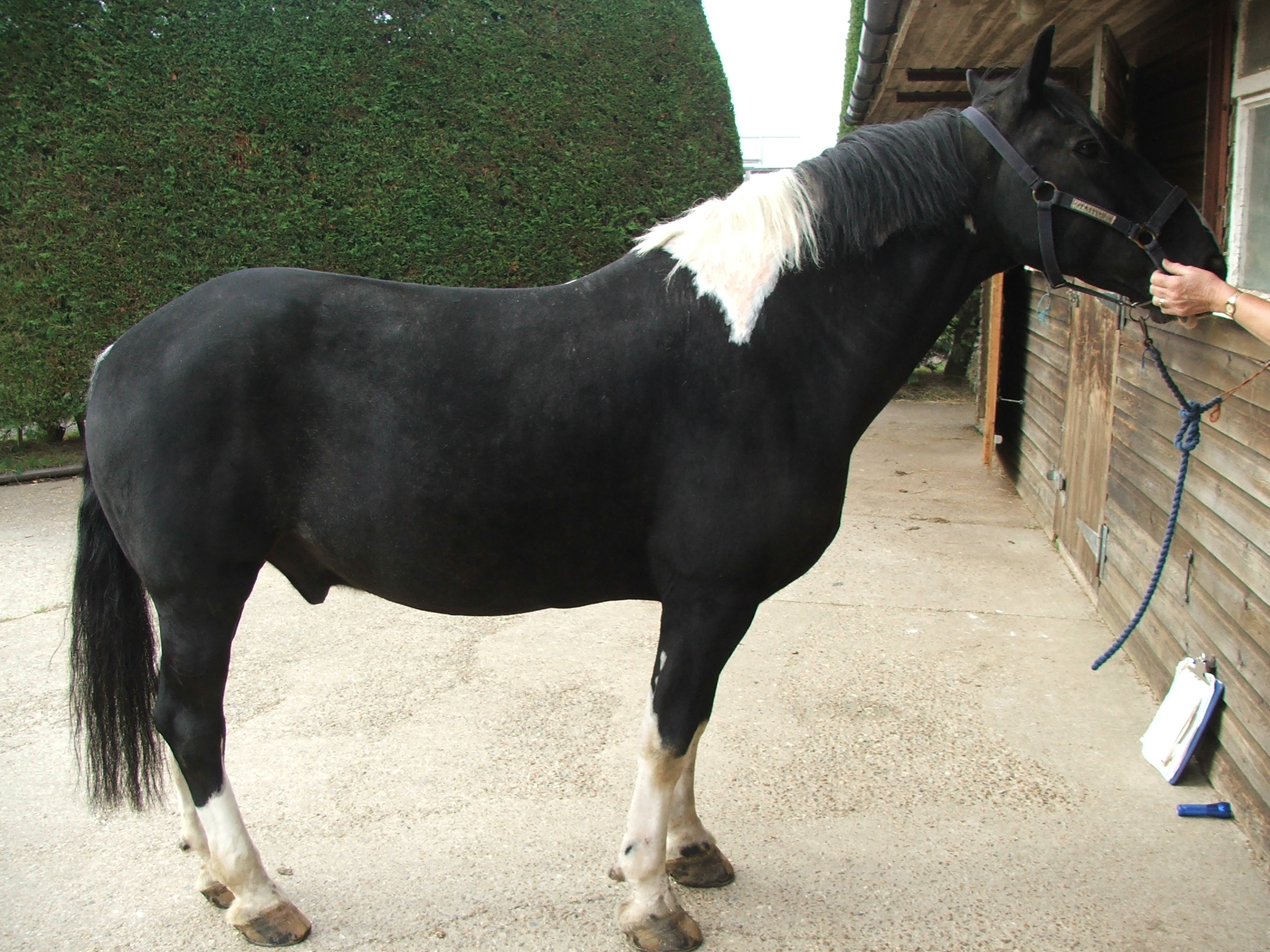 Pony with the skin problem now resolved
